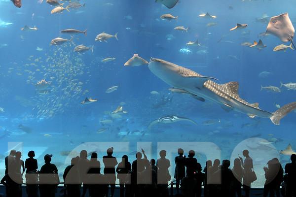 Aquarium2007-09-03_15 55 42