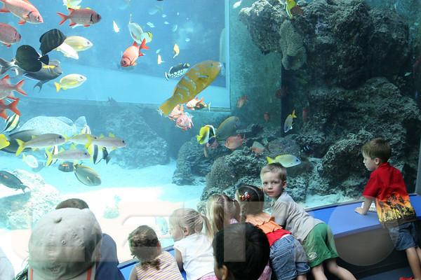 Aquarium2007-09-03_15 22 59