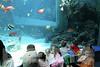 Aquarium2007-09-03_15 22 38