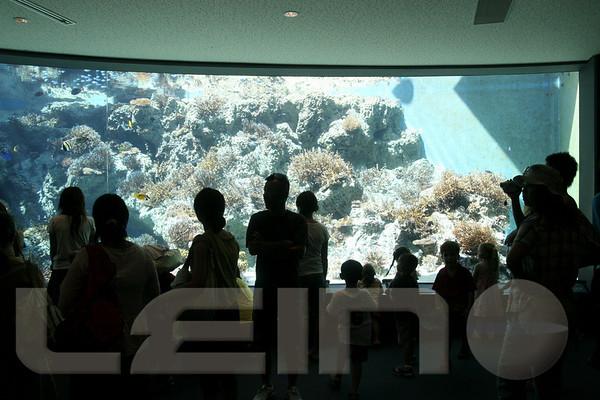 Aquarium2007-09-03_15 10 32