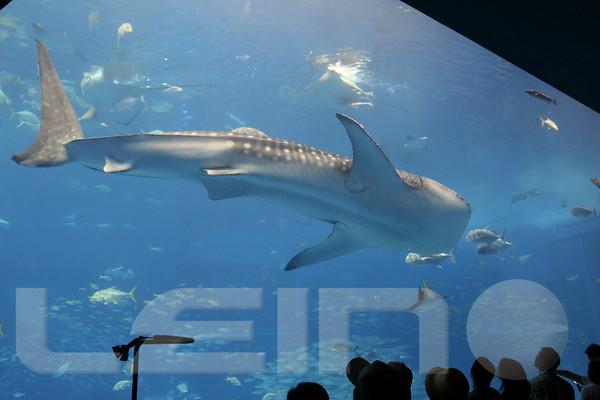 Aquarium2007-09-03_16 09 34