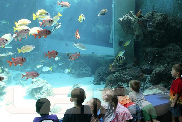 Aquarium2007-09-03_15 23 30