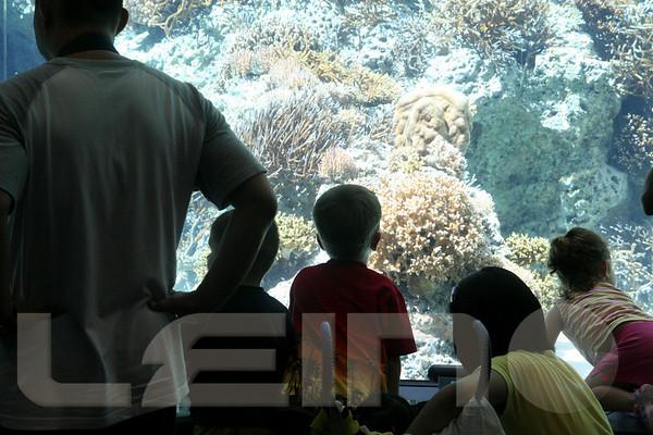 Aquarium2007-09-03_15 12 52