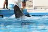 Aquarium2007-09-03_14 39 21