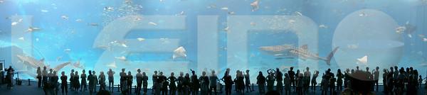 Aquarium2007-09-03_15 54 00