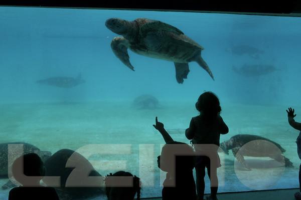 Aquarium2007-09-03_13 50 22