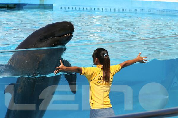 Aquarium2007-09-03_14 36 33
