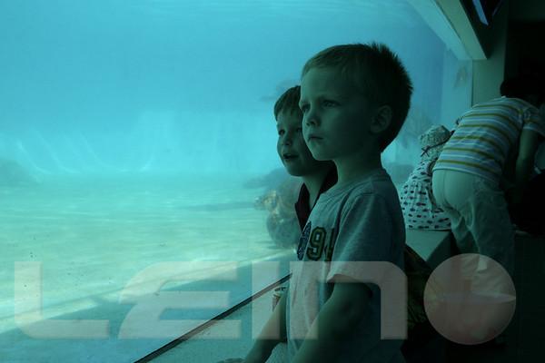 Aquarium2007-09-03_14 01 17