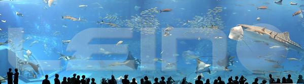 Aquarium2007-09-03_15 54 16