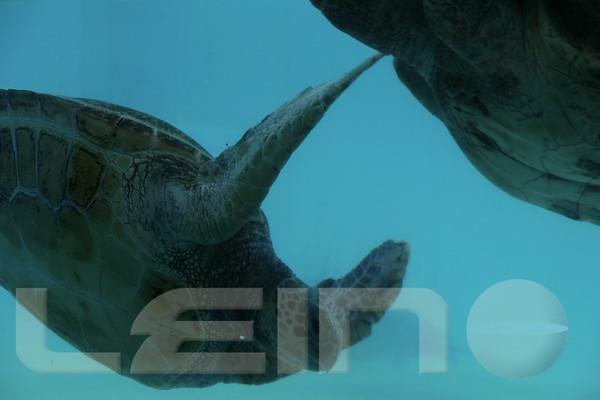 Aquarium2007-09-03_13 47 06