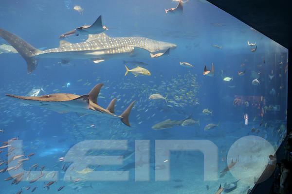 Aquarium2007-09-03_16 02 05