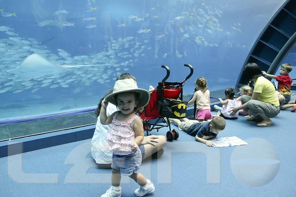 Aquarium2007-09-03_16 17 12