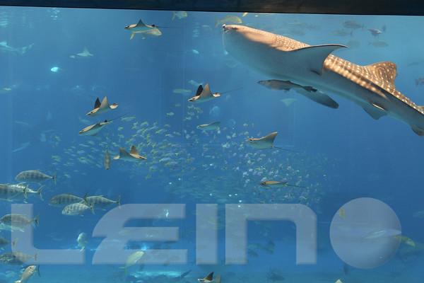 Aquarium2007-09-03_15 53 44