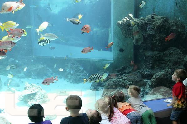 Aquarium2007-09-03_15 23 28