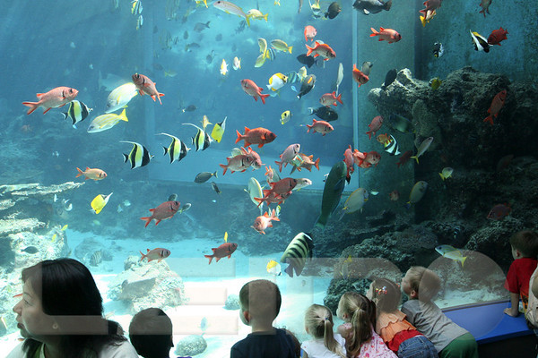 Aquarium2007-09-03_15 23 05