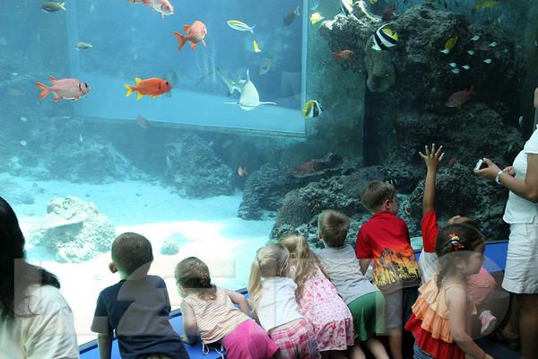 Aquarium2007-09-03_15 22 16