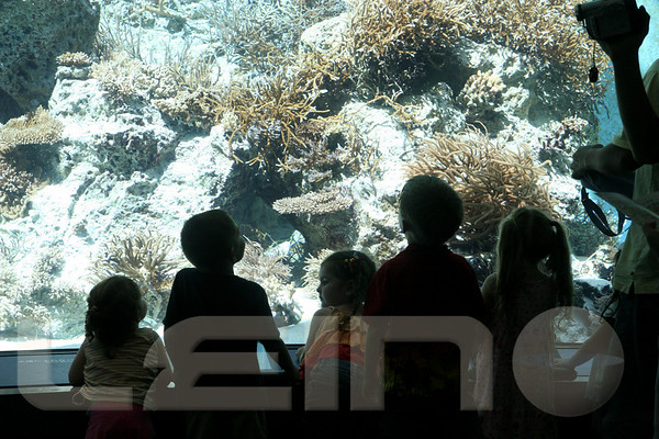 Aquarium2007-09-03_15 10 18