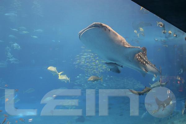 Aquarium2007-09-03_16 01 19