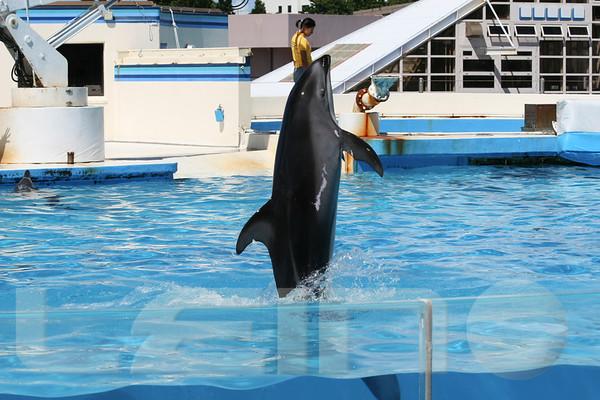 Aquarium2007-09-03_14 42 03