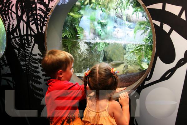 Aquarium2007-09-03_15 44 39