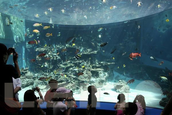 Aquarium2007-09-03_15 21 07