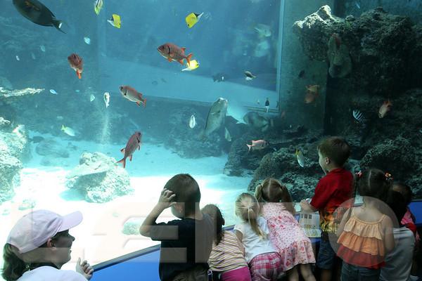 Aquarium2007-09-03_15 21 36