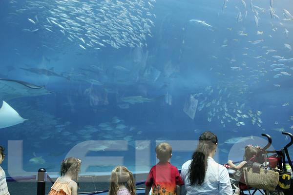 Aquarium2007-09-03_16 13 41
