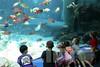 Aquarium2007-09-03_15 23 33