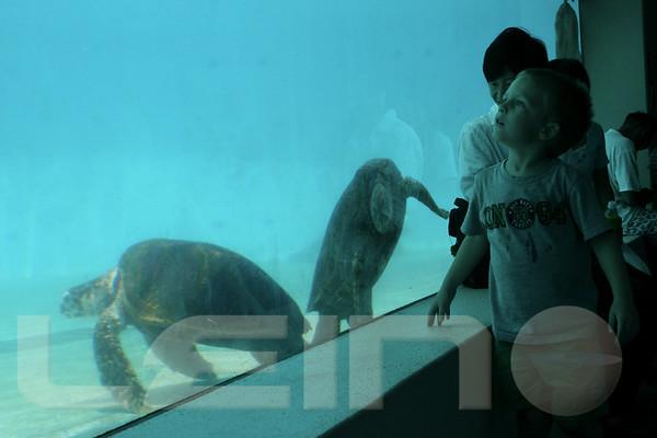 Aquarium2007-09-03_13 58 24