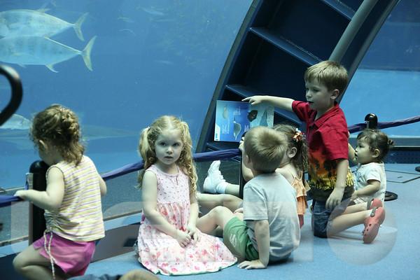 Aquarium2007-09-03_16 16 43