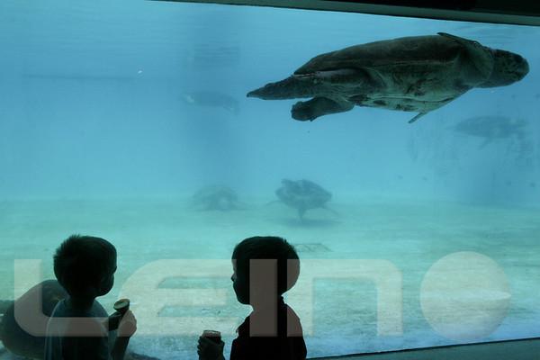 Aquarium2007-09-03_13 49 01