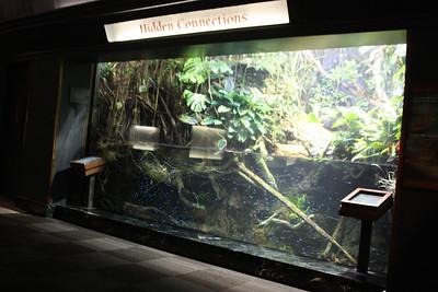 20110225 Shedd Aquarium 969