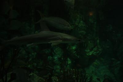 20110225 Shedd Aquarium 025