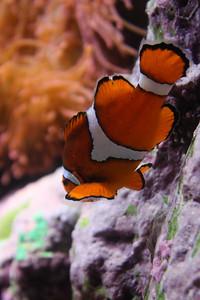 20110225 Shedd Aquarium 947