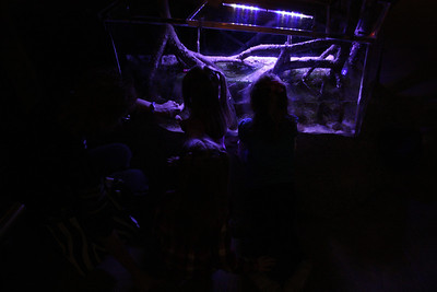 20110225 Shedd Aquarium 951
