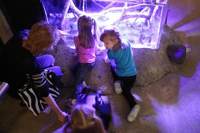 20110225 Shedd Aquarium 952