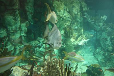 20110225 Shedd Aquarium 021