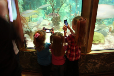 20110225 Shedd Aquarium 013