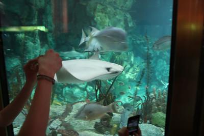 20110225 Shedd Aquarium 017