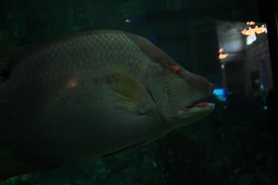 20110225 Shedd Aquarium 024