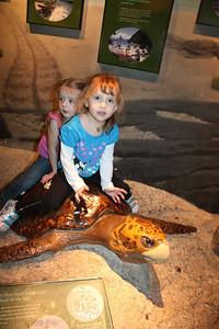 20110225 Shedd Aquarium 962