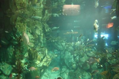 20110225 Shedd Aquarium 009