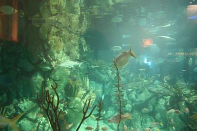 20110225 Shedd Aquarium 008