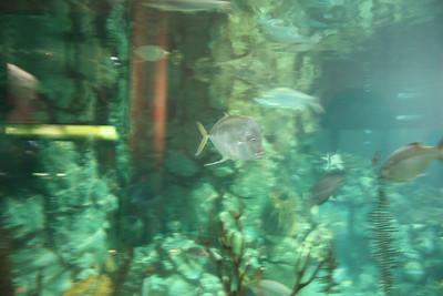 20110225 Shedd Aquarium 005