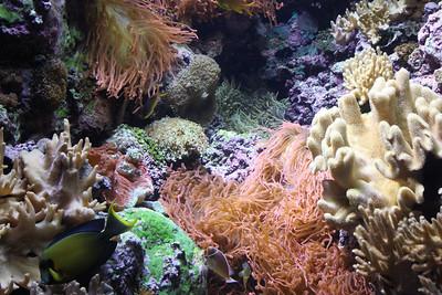 20110225 Shedd Aquarium 943