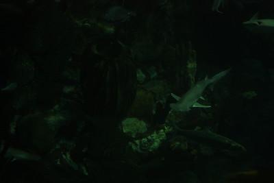 20110225 Shedd Aquarium 030