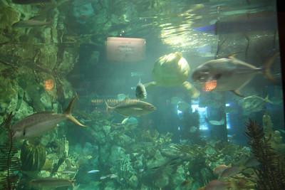20110225 Shedd Aquarium 011