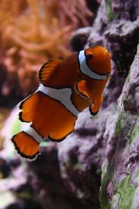 20110225 Shedd Aquarium 949
