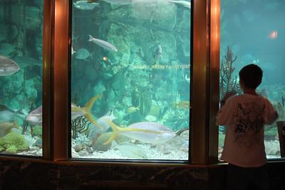 20110225 Shedd Aquarium 970