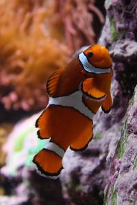 20110225 Shedd Aquarium 948
